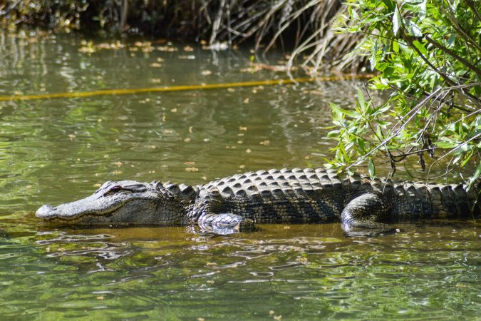 immigrant moat with crocodiles